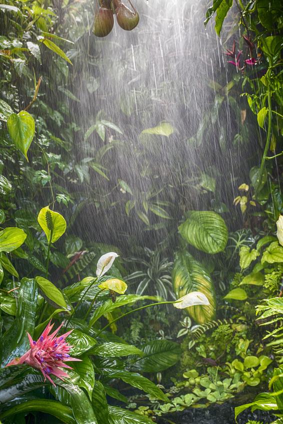 rain in tropical rainforest